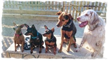 Adiestrador perros Reus Tarragona. Adiestramiento canino